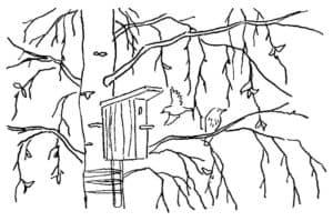дерево со скворечником