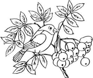 птичка и рябина