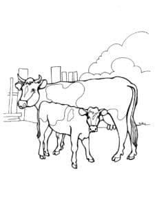 корова и теленок раскраска детская