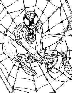 Человек паук в паутине