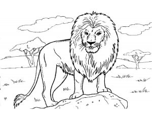 Лев раскраска